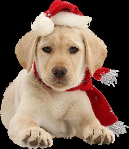 Natale animali for Animali a natale