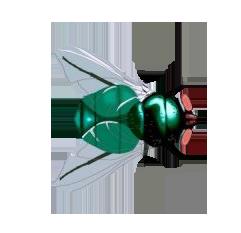 Insetti farfalle mosche ecc page 4 - Mosche verdi ...
